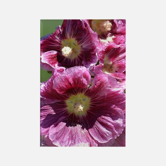 Hollyhock Flowers Rectangle Magnet