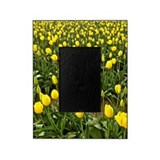 Yellow tulip Picture Frames