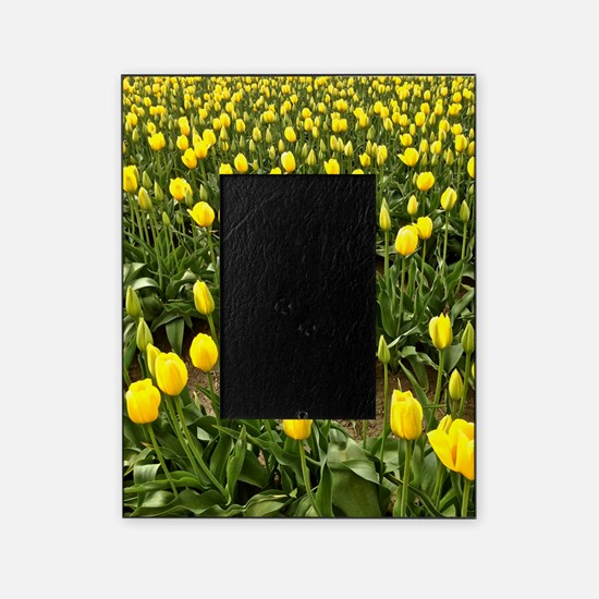 Yellow Field of Tulips Picture Frame