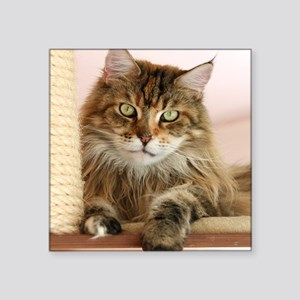 """Maine Coon Square Sticker 3"""" x 3"""""""