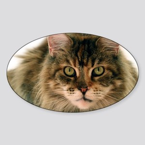Maine Coon Sticker (Oval)