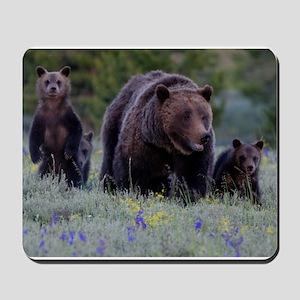 Grizzly Bear 399 Triplets Mousepad