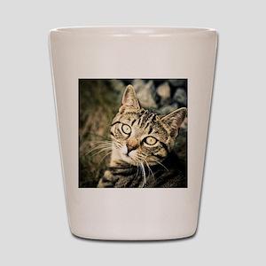Domestic Cat Shot Glass