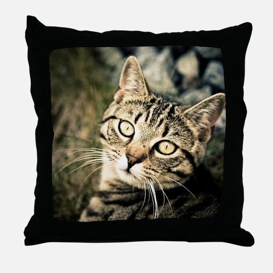 Domestic Cat Throw Pillow