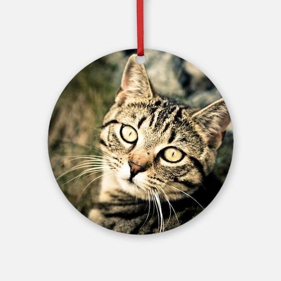 Domestic Cat Round Ornament