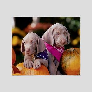 Weimaraner Puppies and Pumpkins Throw Blanket