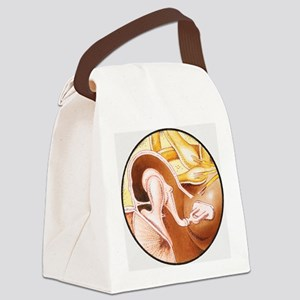 Illustration of middle ear bones, Canvas Lunch Bag