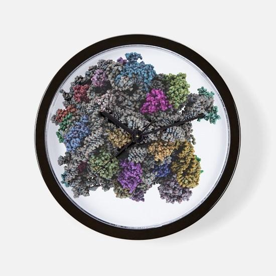 Ribosomal subunit, molecular model Wall Clock