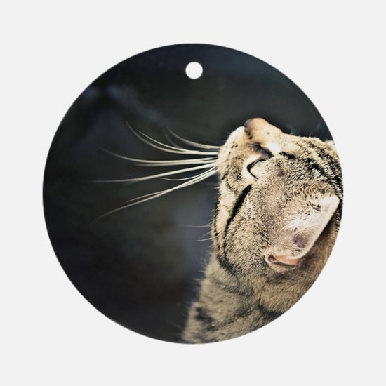 Cute Tabby cat staring Round Ornament