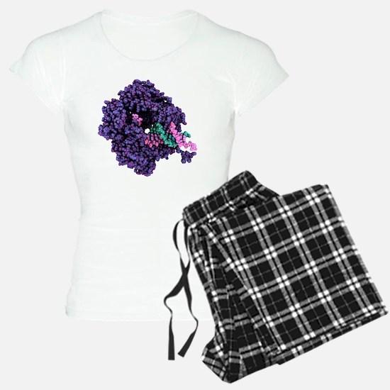 RNA polymerase alpha subuni Pajamas