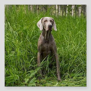 "Portrait of Dog Square Car Magnet 3"" x 3"""