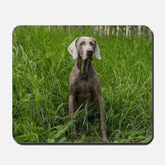 Portrait of Dog Mousepad
