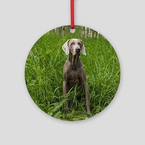 Portrait of Dog Round Ornament