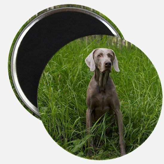 Portrait of Dog Magnet