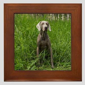 Portrait of Dog Framed Tile