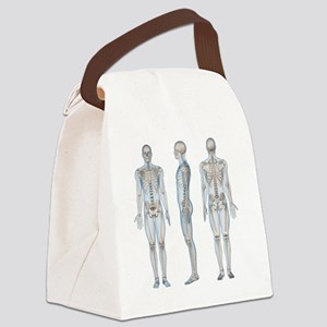 Male skeleton, computer artwork. Canvas Lunch Bag