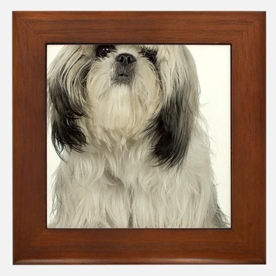 Portrait of Tibetan terrier puppy Framed Tile