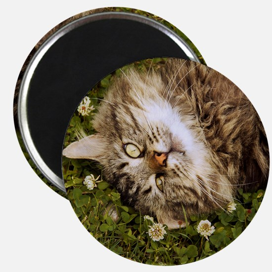 A brown long-haired tabby cat laying on the Magnet
