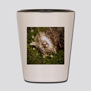 A brown long-haired tabby cat laying on Shot Glass