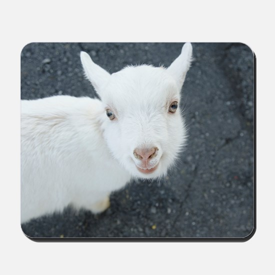 Curious white goat Mousepad