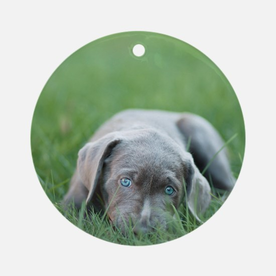 Blue eyed puppy resting on grass. Round Ornament