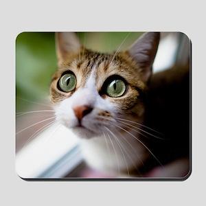 Cat green big eyes. Mousepad