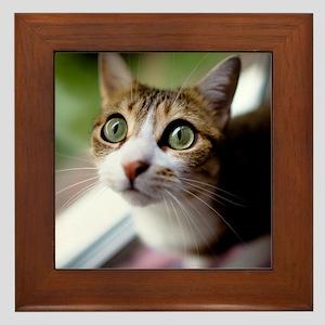Cat green big eyes. Framed Tile