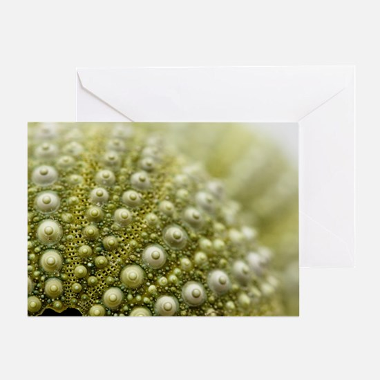 Close up of green sea urchins stacke Greeting Card