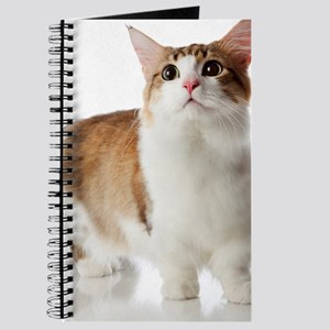 Cat with short legs Journal