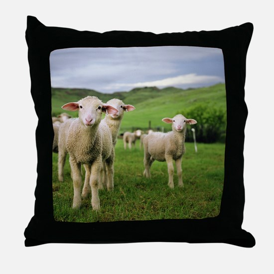 Curious lambs during an evening graze Throw Pillow