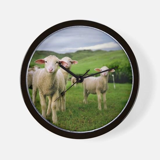 Curious lambs during an evening graze i Wall Clock