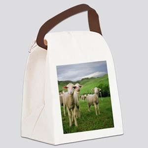 Curious lambs during an evening g Canvas Lunch Bag