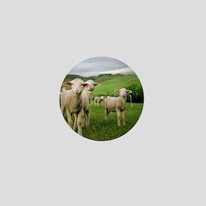Curious lambs during an evening graze  Mini Button