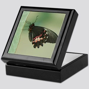 Butterfly rests on piece of ribbon at Keepsake Box