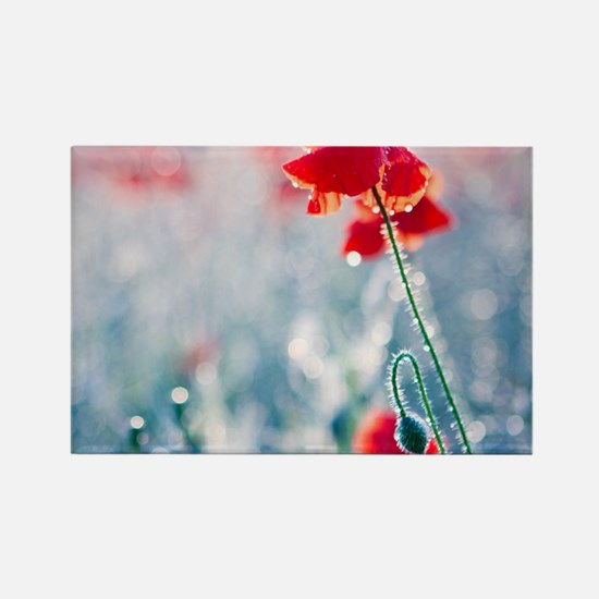 Field of red poppies in flower wi Rectangle Magnet