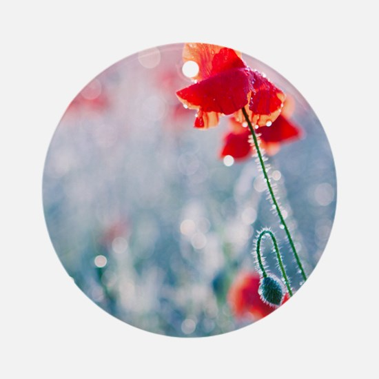 Field of red poppies in flower with Round Ornament