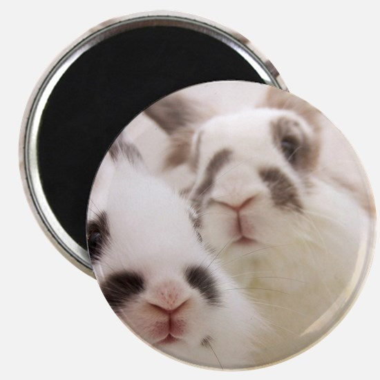 Close up of Rabbits Magnet