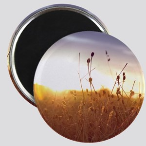 Field of dry grass at sunset. Magnet