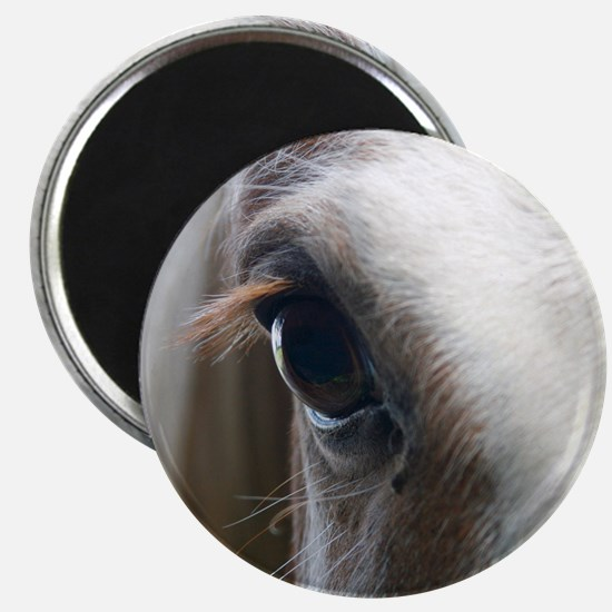 Close up of White horse eye Magnet