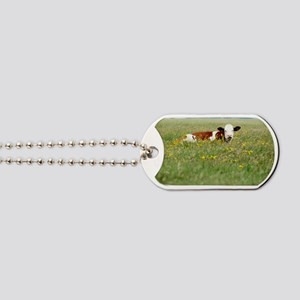 Cow resting in field of tall grass with f Dog Tags