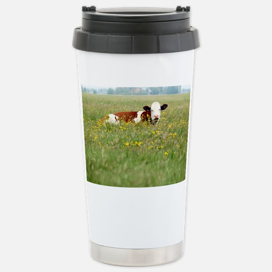 Cow resting in field of Stainless Steel Travel Mug
