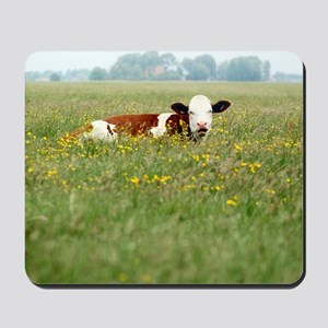Cow resting in field of tall grass with  Mousepad