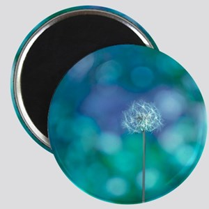 Dandelion with blue and green background. Magnet