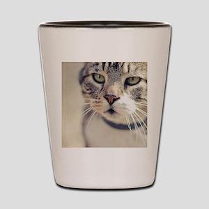 Closeup of face of tabby cat. Shot Glass