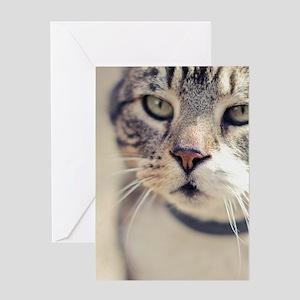 Closeup of face of tabby cat. Greeting Card