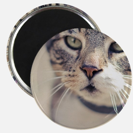 Closeup of face of tabby cat. Magnet