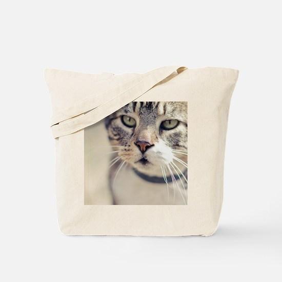 Closeup of face of tabby cat. Tote Bag
