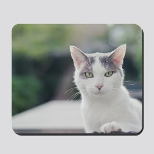 Grey and white cat looking through windo Mousepad