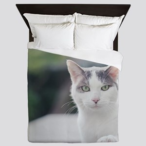 Grey and white cat looking through win Queen Duvet