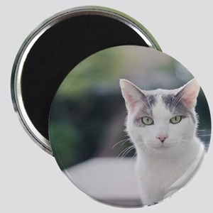 Grey and white cat looking through window. Magnet